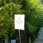 Adelaide Botanic Garden Food Foraging Tour