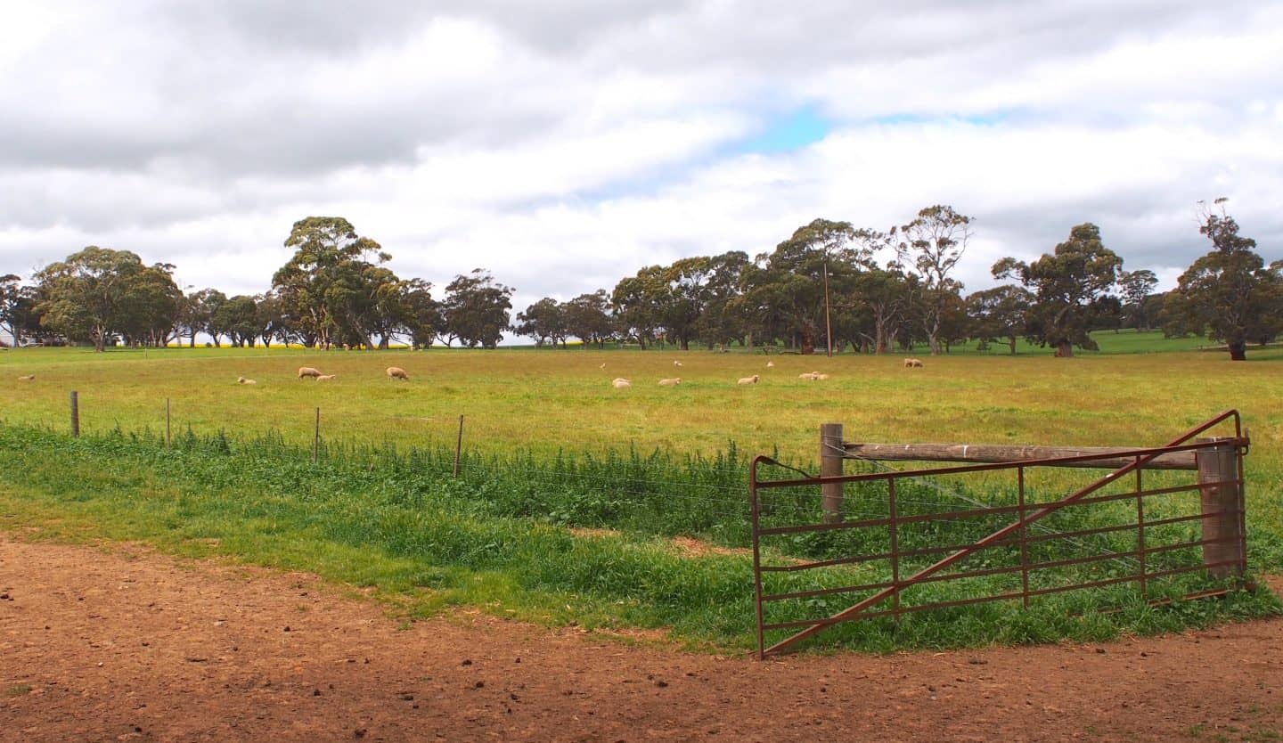 Wide, open spaces at Martindale Farm